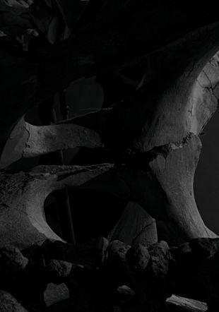 """Yann Mingard, Tant de choses planent dans l'air, d'où notre vertige, chapitre """"Mammoth"""", Collection de paléontologie systématique, Musée cantonale de géologie, Lausanne, Suisse, 2017 © Yann Mingard / Courtesy Parrotta Contemporary Art"""
