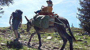 En chemin itinér'ânes