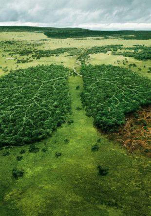 © WWF