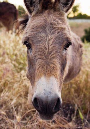 Seule dans ma peau d'âne © Tim Mossholder