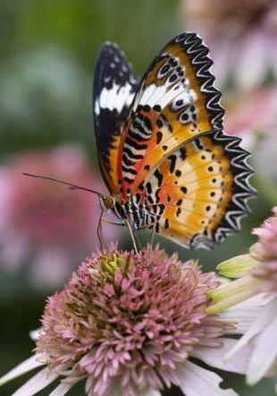 La Serre aux papillons, chez Schilliger à Gland