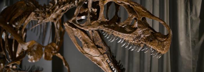 Squelette de Big Al 2 Jurassica, Patrick Roeschli