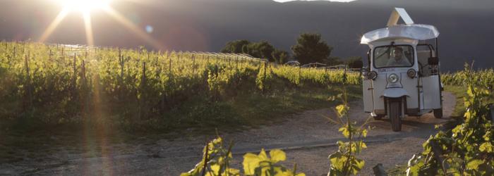 TukTuk dans les vignes TaxiBike SA