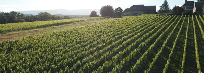 Nos vignes à colombier Châteaudecolombier