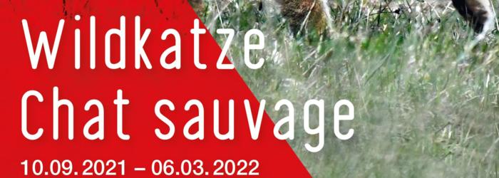 Chat sauvage_2021_ Patricia Huguenin et Design NG Tornay